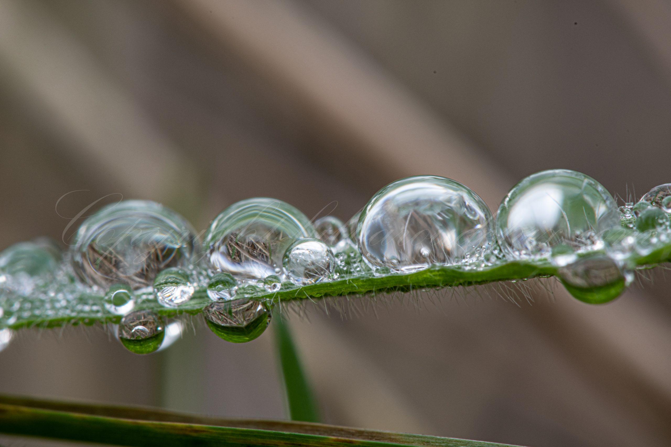 Gouttes d'eau sur brin d'herbe