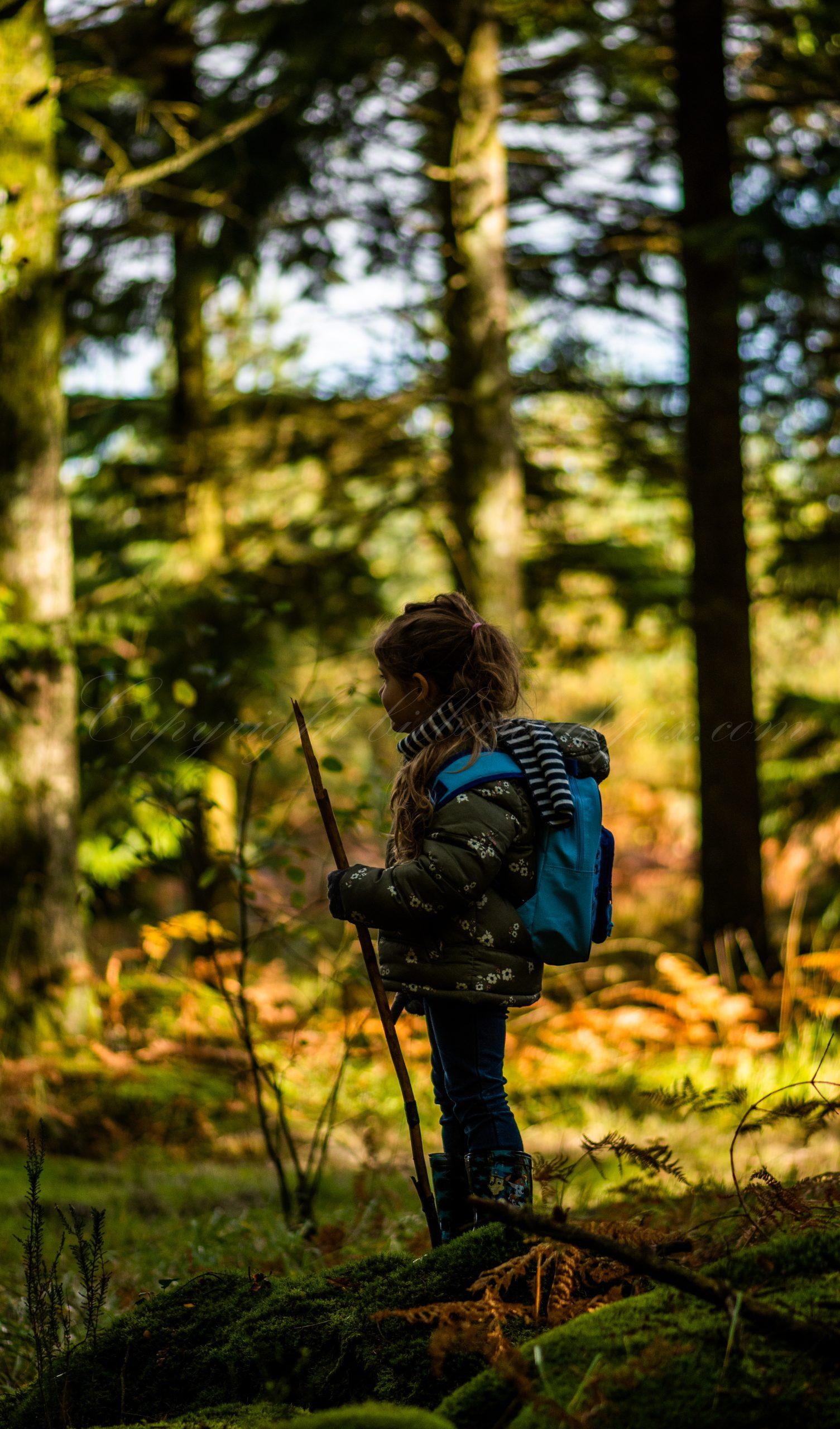 L'appel de la forêt