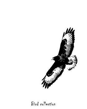 """Buse variable """"Bird collection"""""""