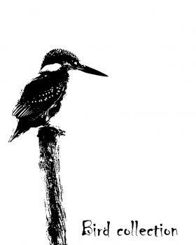 "Martin pêcheur ""Bird collection"""