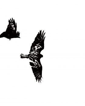 "Combat aérien ""Bird collection"""