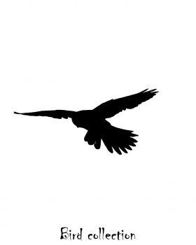 """Fauucon crecerelle """"Bird collection"""""""