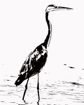 """Héron cendré """"Bird collection"""""""