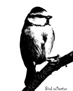 "Mésange bleue ""Bird collection"""